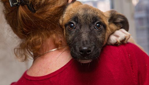 The Latest on the Ark Animal Rescue Shelter Legal Battle